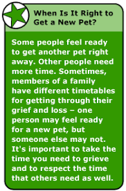 grieving loss of pet my pet died how can i feel better