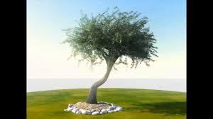 animated tree in 3d wind olea