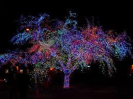 magic tree lighting 2017 columbia convention and visitors bureau