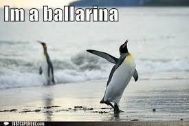Funny Bird Memes - funny pictures funny bird pictures with captions internet memes