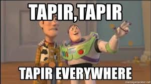 Xx Everywhere Meme Generator - tapir tapir tapir everywhere x x everywhere meme generator