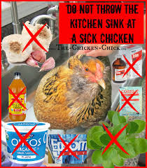 the chicken how to help a sick chicken
