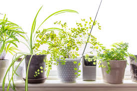 Best Plants For Living Room Best Indoor Plant Choices For Small Apartments Apartment Therapy