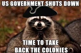 Funny Raccoon Meme - awesome funny raccoon meme funny pinterest testing testing
