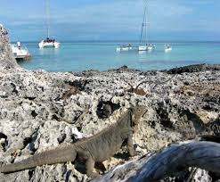 iguana island cayocruzdelpadre cuba is an undeveloped island pertaining to the