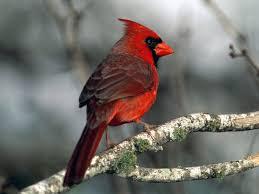 cardinal bird home decor heath outdoor stack u0027m seed cakes for cardinals and all wild birds