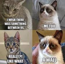 Mean Cat Meme - 61 best cat memes images on pinterest funny animals funny kitties