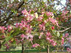 small ornamental trees zone 5 related keywords suggestions