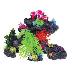 25 best coral for your aquarium images on