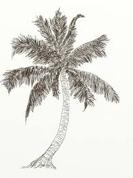 free image on pixabay palm tree coconut cocos outline