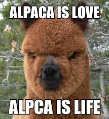 Alpaca Meme - alpaca meme