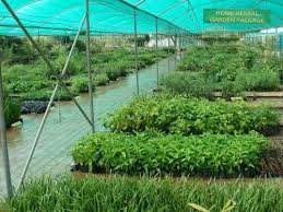 herbal garden center for herbal gardens landscaping services in yelahanka attur
