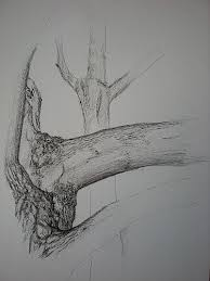 pen and paper sketch of a tree trunk by grace elwell u002710