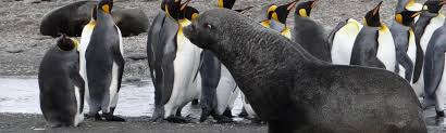 Georgia wildlife tours images Top 12 cruises to south georgia antarctica falkland islands jpg