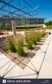 native drought tolerant plants xeriscape landscaping around the university of utah using drought