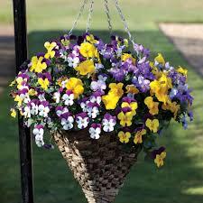 garden design garden design with spider hanging basket silk plant