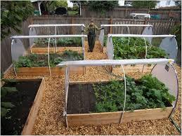 home vegetable garden design unbelievable best 25 small gardens