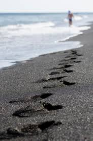 Black Sand Beaches by Top 10 Fascinating Black Sand Beaches Around The World Top Inspired