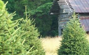 bluebird christmas tree farm in heiskell tn tennessee vacation