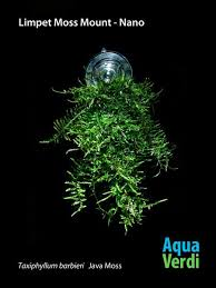 Aquascape Moss News U2013 Tagged