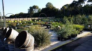 the native plant centre glenvue nursery indigenous native plants and shrubs