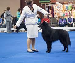 belgian shepherd national specialty ringtime slipcheck belgian sheepdogs