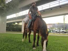 Are Horses Color Blind Man Riding A Horse From South Carolina To Key West Arrested In