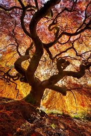 12 fantastic photos of fall trees exploding with color