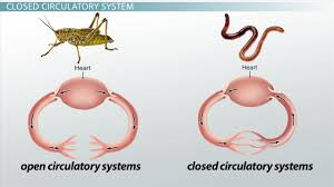 open circulatory systems definition u0026 examples video u0026 lesson