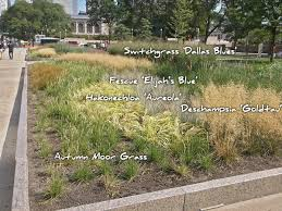 ornamental grasses sustaining