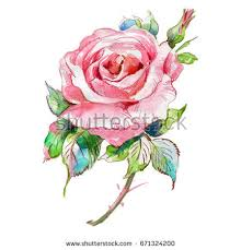 watercolor bouquet flowers rose iris hyacinth stock illustration