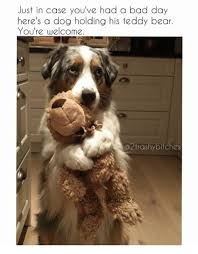 Bad Day Meme - just in case you ve had a bad day here s a dog holding his teddy