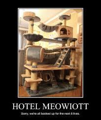 Funny Hotel Memes - i can has cheezburger marriott funny internet cats cat memes