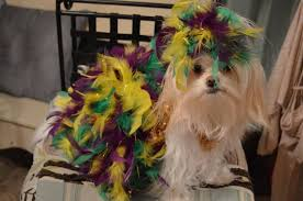 mardi gras jester ribbon dog 15 of the best dog mardi gras costumes in the bayou scoutknows
