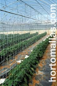 taking advantage of the genetics of seeds using hortomallas