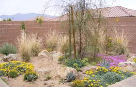 Desert Landscape Ideas For Backyards Desert Landscaping Picks The Plants Ideas Dzuls Interiors