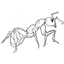formica rufa ant colouring page to print for toddler