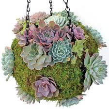 succulent kits diy succulent u0026 planter kits mountain crest gardens