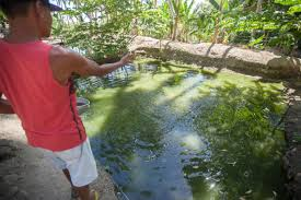 Backyard Fish Farming Tilapia Catmon Resident Finds Fortune In Tilapia Farming Fish Products