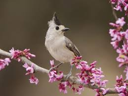 Flower And Bird - bird and flowers birds animals background wallpapers on