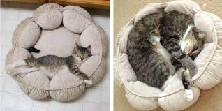these 20 recreations of cats u0027 kittenhood photos bring families