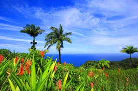 oceans islands sky coast pacific view flowers palm polynesia