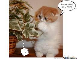 Stupid Cat Meme - stupid cat by fudge1 meme center