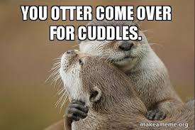 Cuddle Meme - you otter come over for cuddles make a meme