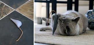 catlivin ottoman and wedge