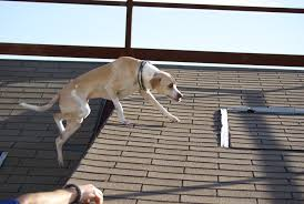 Dog On A Roof 2015 Alpha Sar At The Fire Marshal Training Center