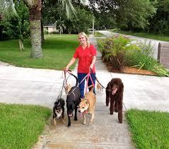 mary the pet nanny jacksonville fl 32224 yp com