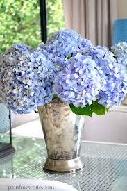 Hydrangea Flowers Best 25 Blue Hydrangea Ideas On Pinterest Blue Flowers Blue