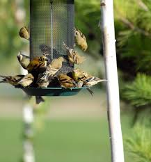 summer bird feeding tips keep seeds away from squirrels