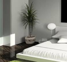 pflanzen für schlafzimmer luftreinigende pflanzen ratgeber hornbach